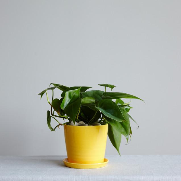 plant-02