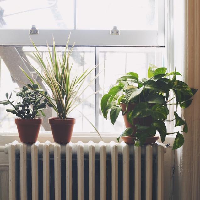 plant-03